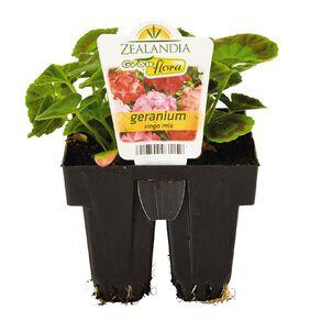 Growflora Geranium Ringo Mix