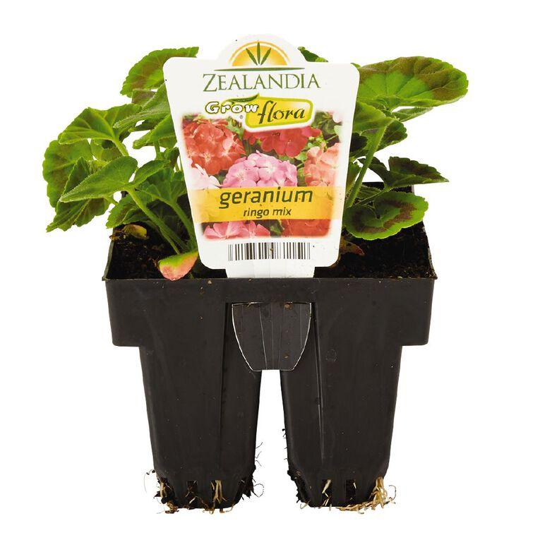 Growflora Geranium Ringo Mix, , hi-res