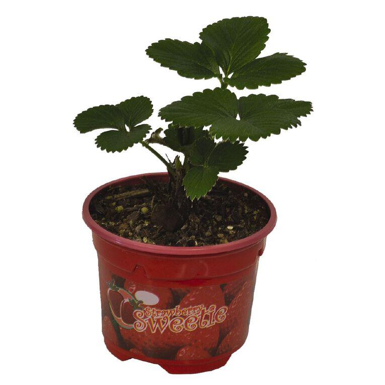 Strawberry Sweetie 9cm Pot, , hi-res