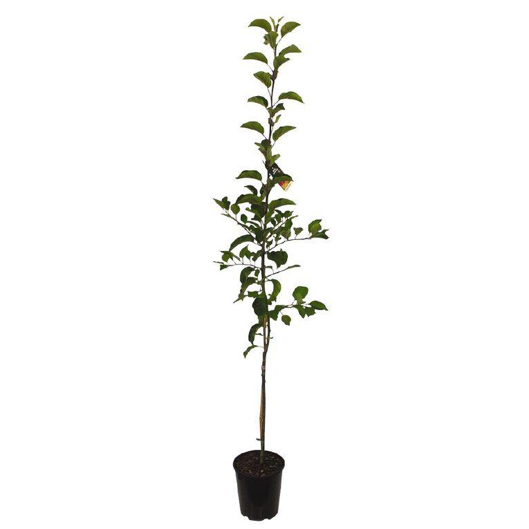 Apple Tree 4.7L Pot, , hi-res