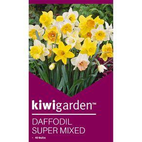 Kiwi Garden Daffodil Super Mix 40PK