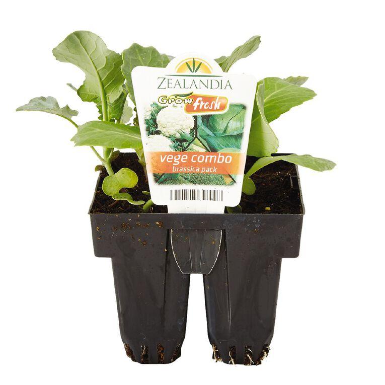 Growfresh Vege Combo Brassica, , hi-res