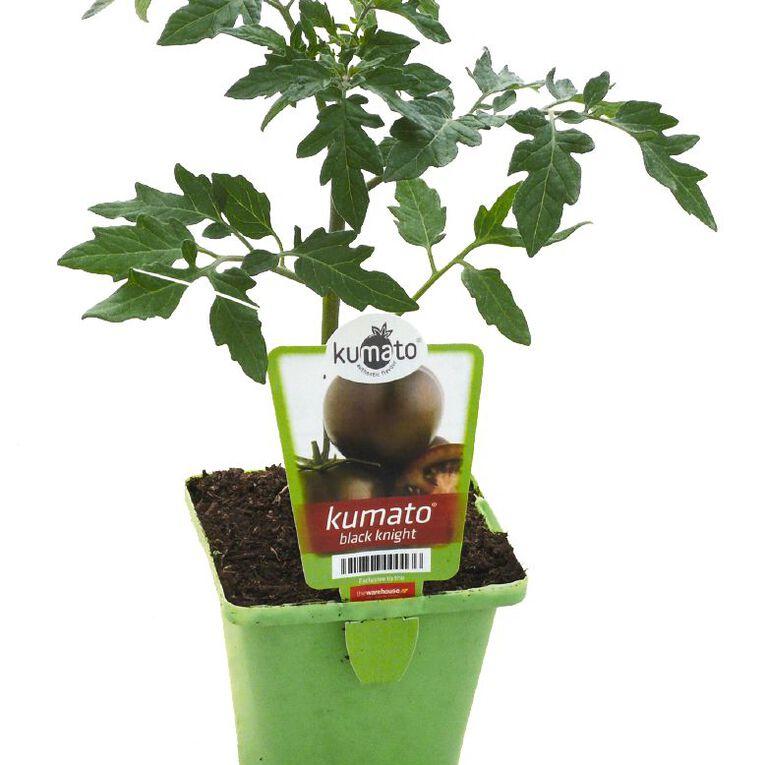 Kumato Tomato Black Knight 10cm Pot, , hi-res