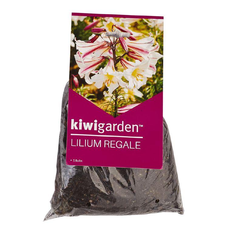 Kiwi Garden Christmas Flowering Lilium Bulb Regale 3PK, , hi-res