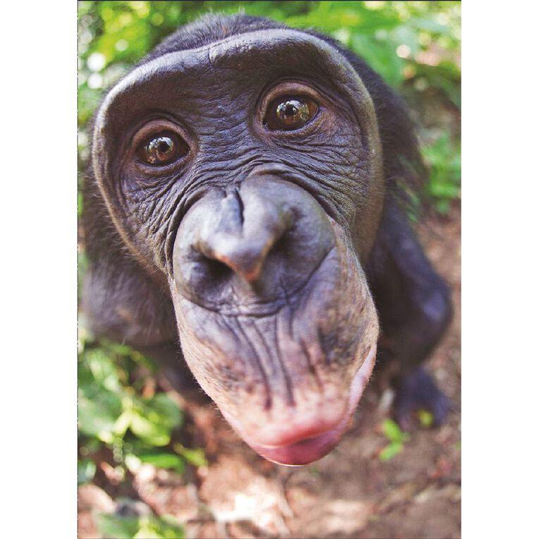 John Sands Birthday Card Humour Monkey Kiss, , hi-res