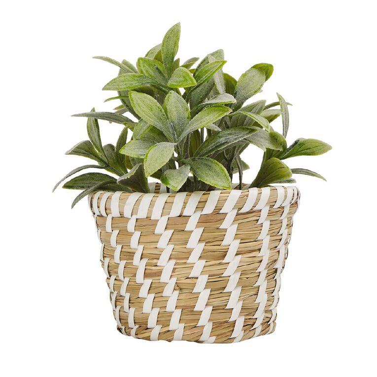 Living & Co Artificial Succulent Woven Pot 12 x 12 x 19cm Natural, , hi-res