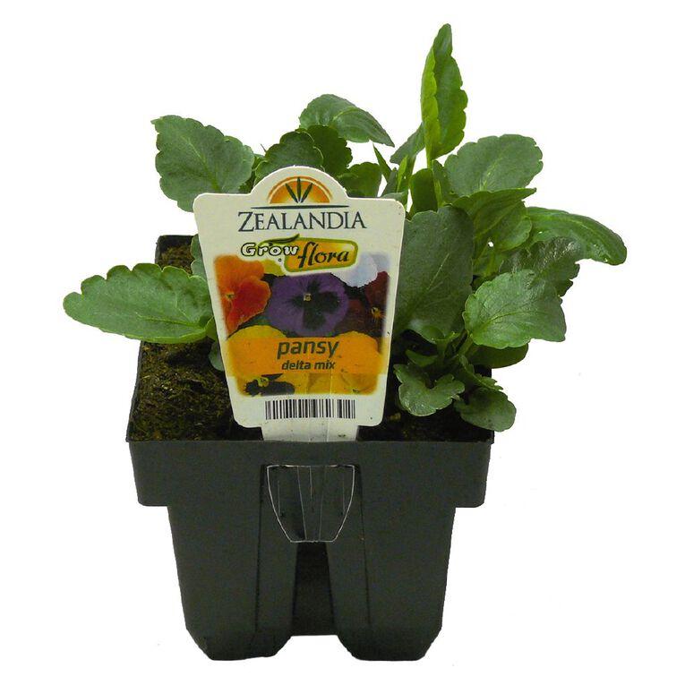 Growflora Pansy Delta Mix, , hi-res