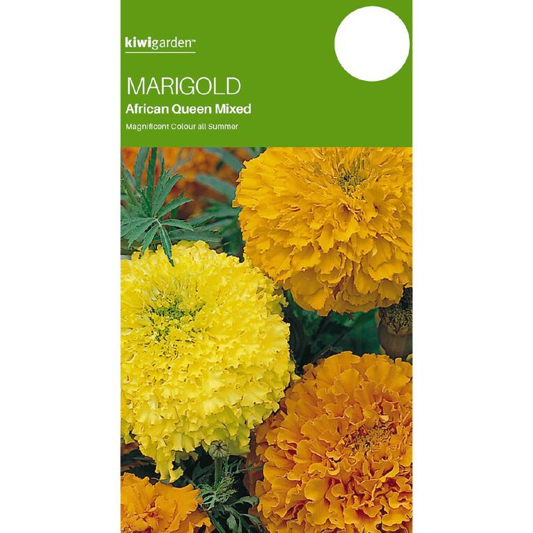 Kiwi Garden Marigold African Queen, , hi-res
