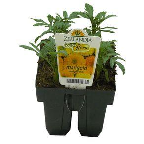 Growflora Marigold Antigua Mix