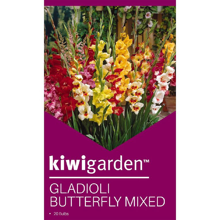 Kiwi Garden Gladioli Corm Butterfly Mix 15PK, , hi-res
