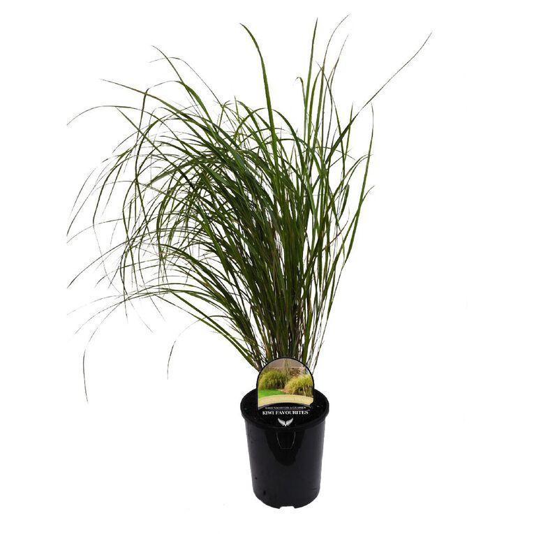 Landscape Grass Anemanthele Lessoniania 1.5L Pot, , hi-res