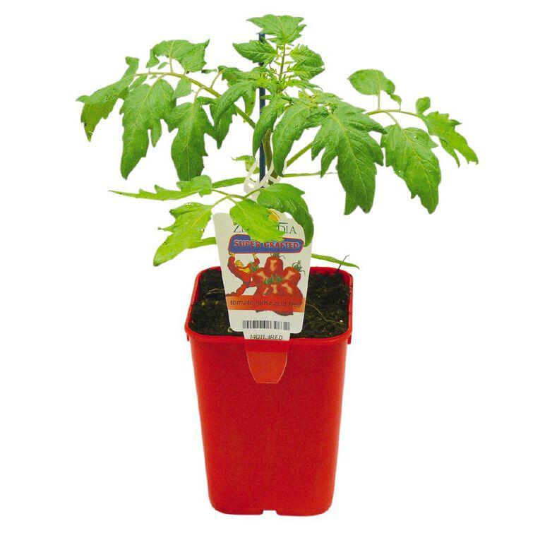 Supergrafted Tomato Roma Acid Free 1.3L Pot, , hi-res