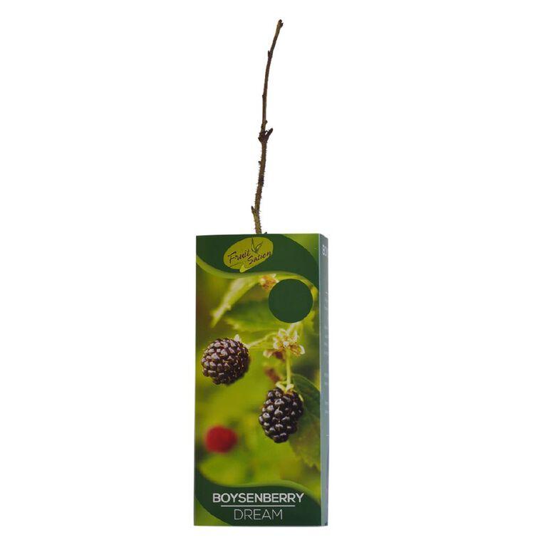 Fruit Sation Berry Fruit Boysenberry Tasman Bareroot, , hi-res