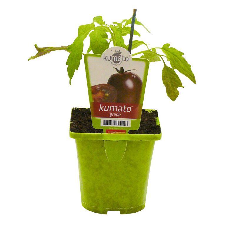 Kumato Tomato Grape 10cm Pot, , hi-res