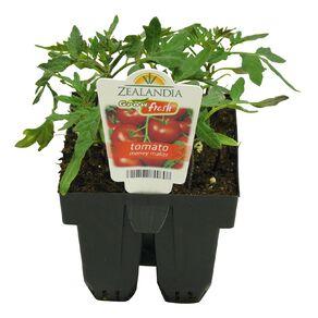 Growfresh Tomato Money Maker