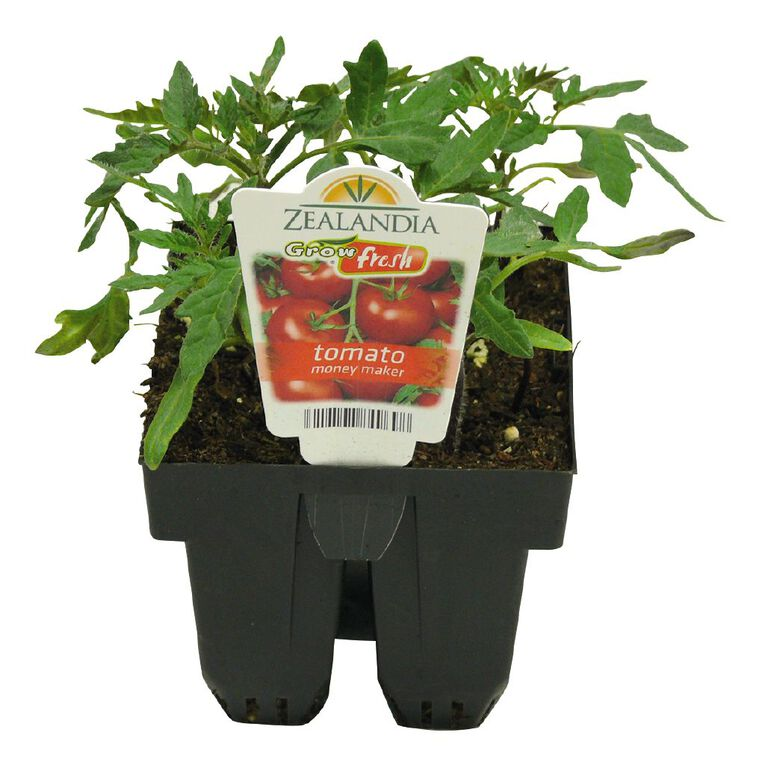 Growfresh Tomato Money Maker, , hi-res