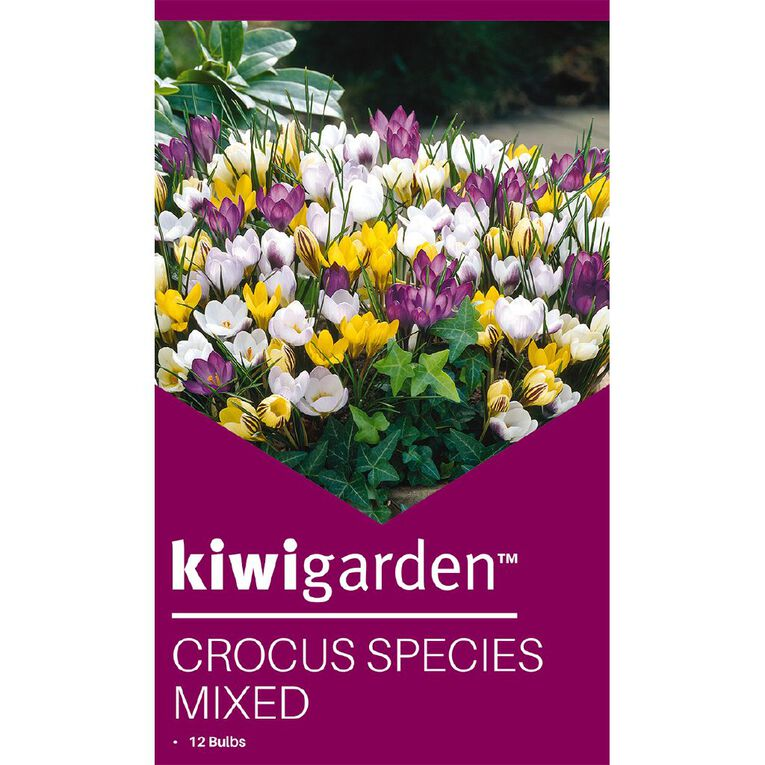 Kiwi Garden Crocus Species Mixed 12PK, , hi-res