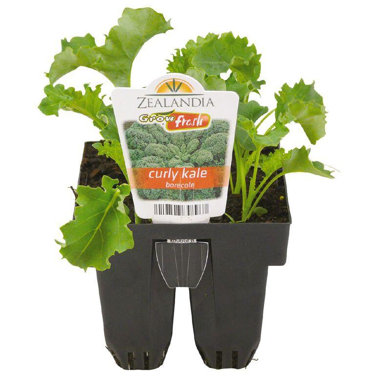 Growfresh Curly Kale Borecole, , hi-res