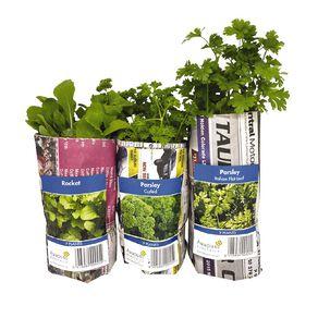 Herbs Assorted 10CM