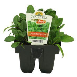 Growfresh Spinach Perpetual
