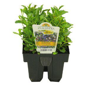Growflora Lobelia Cascade Mix