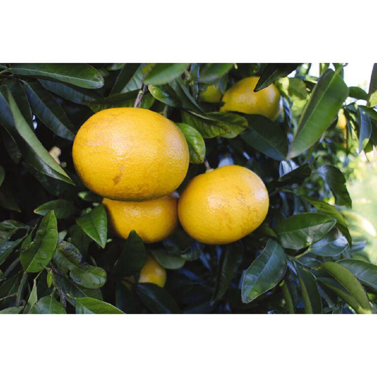 Citrus Grapefruit 4.7L Pot, , hi-res