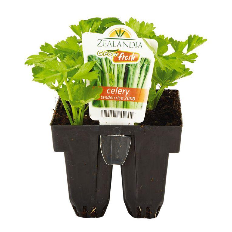 Growfresh Celery Tendercrisp 2000, , hi-res
