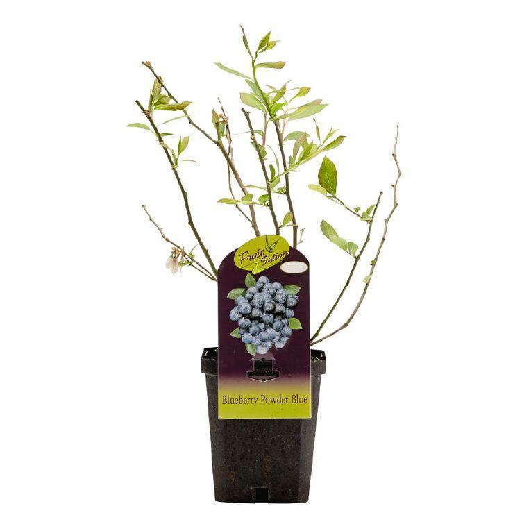 Fruit Sation Blueberry Powder Pot 12cm Pot, , hi-res