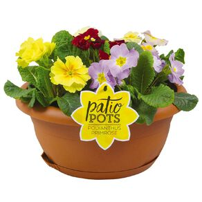 Patio Bowl Flower Poly/Primrose Mix 30cm Bowl