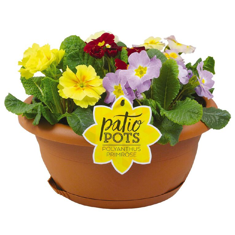 Patio Bowl Flower Poly/Primrose Mix 30cm Bowl, , hi-res