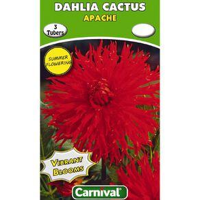 Kiwi Garden Dahlia Bulb Single Variety 3 Pack