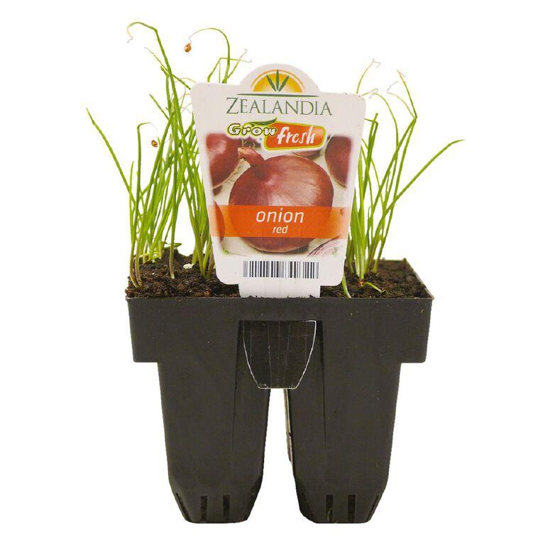 Growfresh Onion Red, , hi-res