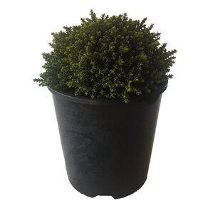 Hebe Emerald Gem 1.9L Pot