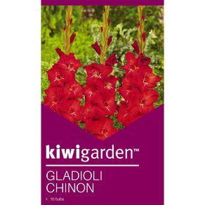 Kiwi Garden Gladioli Chinon 10PK