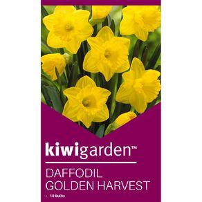 Kiwi Garden Daffodil Golden Harvest 10PK
