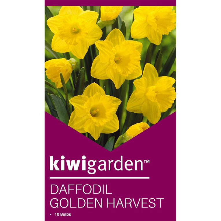 Kiwi Garden Daffodil Golden Harvest 10PK, , hi-res