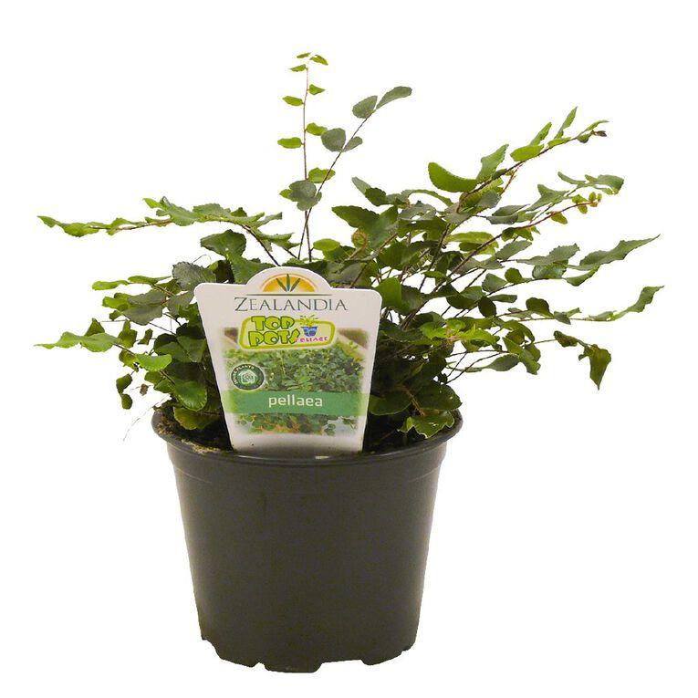 Indoor Top Pot Houseplant 10cm Pot, , hi-res