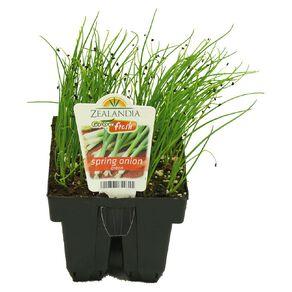 Growfresh Spring Onion