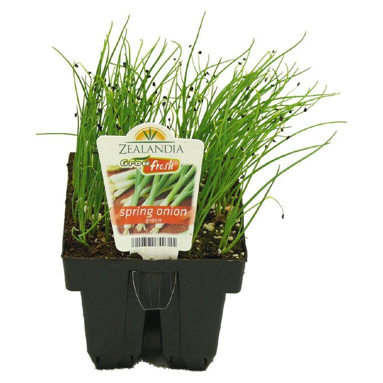 Growfresh Spring Onion, , hi-res