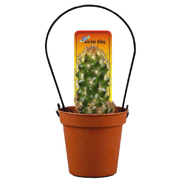 Cacti Assorted 5.5cm Pot, , hi-res