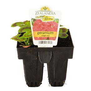 Growflora Geranium Ringo Red