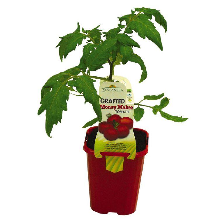 Grafted Tomato 10cm Pot, , hi-res