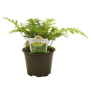 Indoor Top Pot Houseplant 10cm Pot