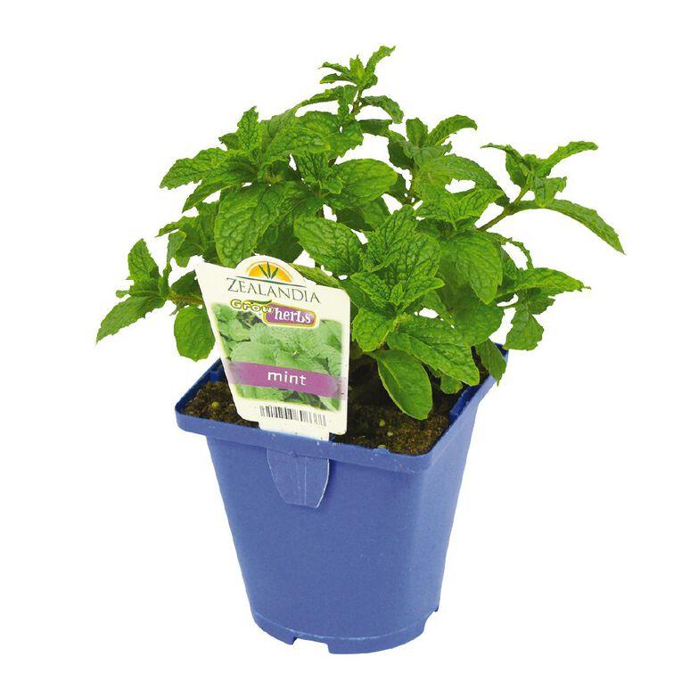 Growherbs Mint Common, , hi-res
