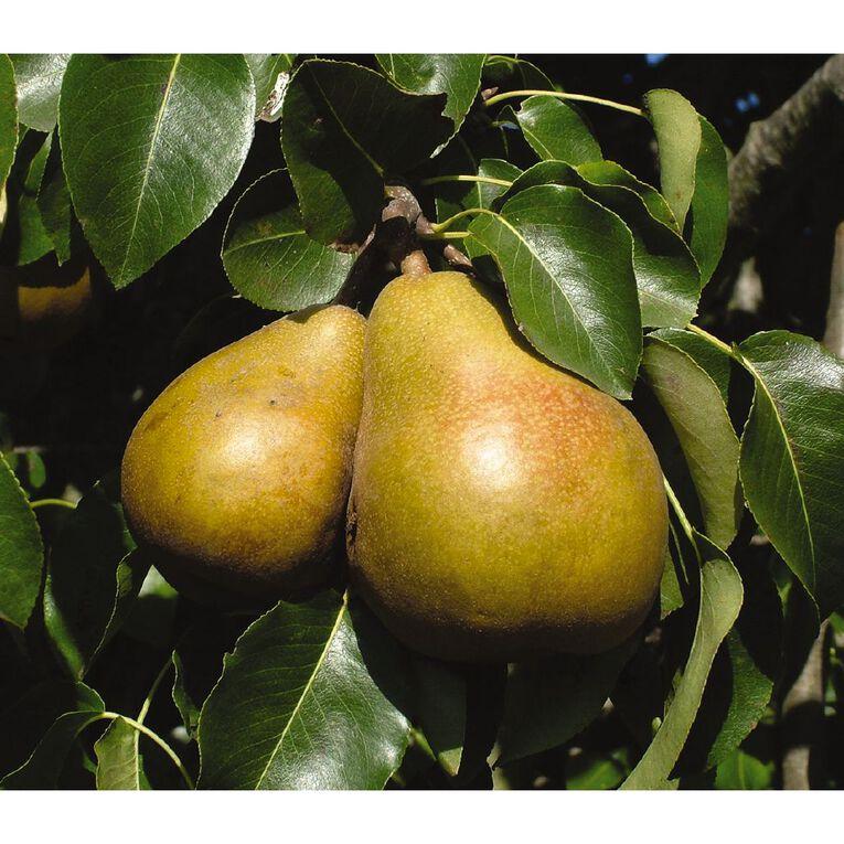 Pear Tree PB8 4.7L, , hi-res image number null