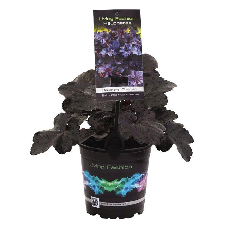 Heuchera Obsidian 12cm Pot, , hi-res