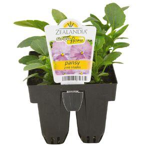 Growflora Pansy Pink Shades
