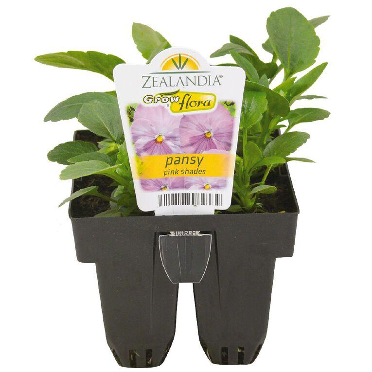 Growflora Pansy Pink Shades, , hi-res