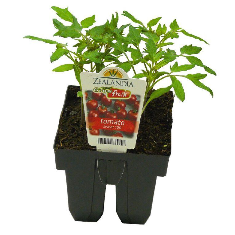 Growfresh Tomato Sweet 100, , hi-res