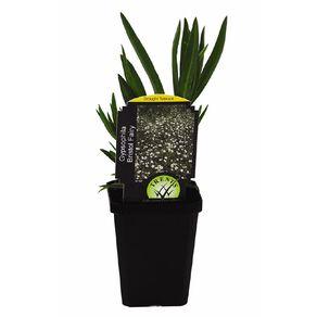 Perennials Assorted 9cm Pot